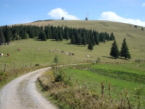 Mountainbiking and Cycling in the Black Forest